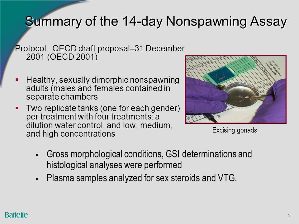 13 Summary of the 14-day Nonspawning Assay Protocol : OECD draft proposal–31 December 2001 (OECD 2001)  Healthy, sexually dimorphic nonspawning adults (males and females contained in separate chambers  Two replicate tanks (one for each gender) per treatment with four treatments: a dilution water control, and low, medium, and high concentrations  Gross morphological conditions, GSI determinations and histological analyses were performed  Plasma samples analyzed for sex steroids and VTG.
