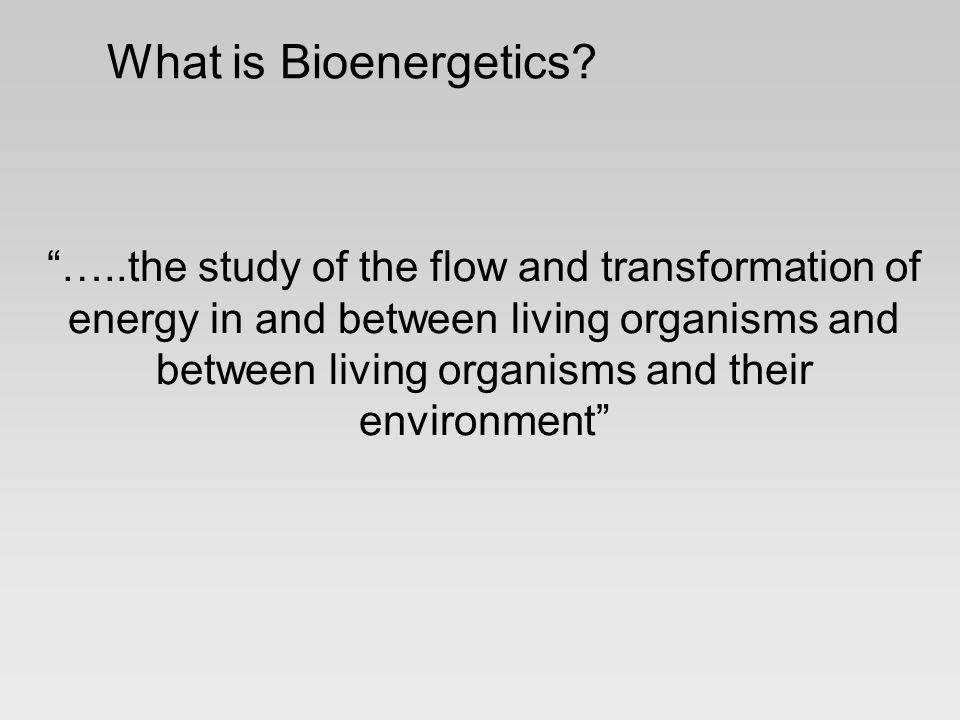 What is Bioenergetics.
