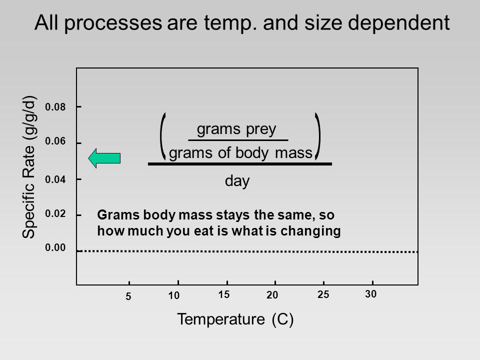Specific Rate (g/g/d) 0.08 0.06 0.04 0.02 0.00 5 10 15 20 25 30 Temperature (C) grams prey grams of body mass day All processes are temp.