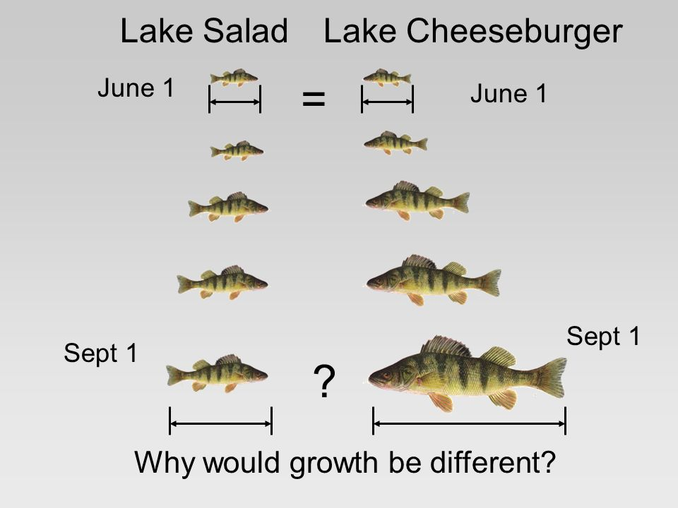 Lake CheeseburgerLake Salad = June 1 Sept 1 Why would growth be different