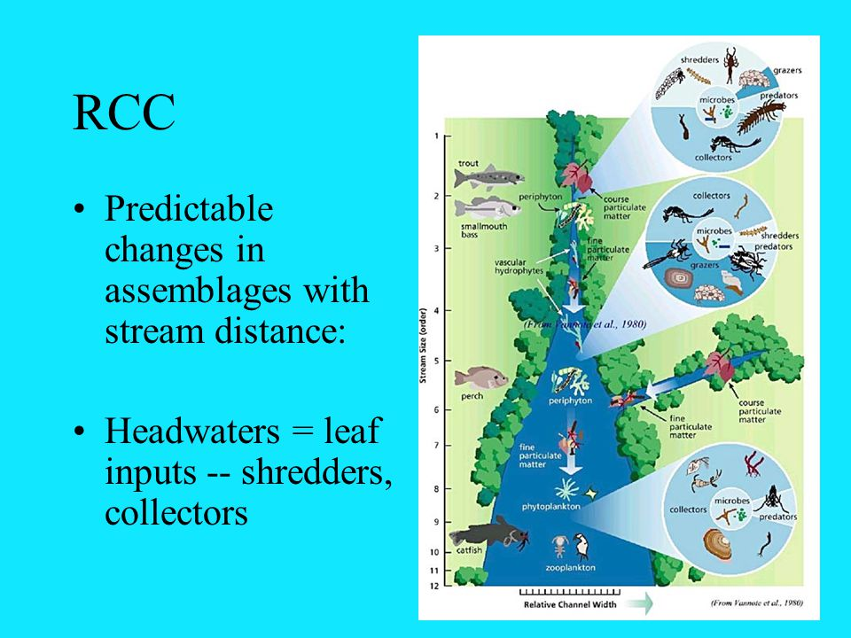 RCC Predictable changes in assemblages with stream distance: Headwaters = leaf inputs -- shredders, collectors