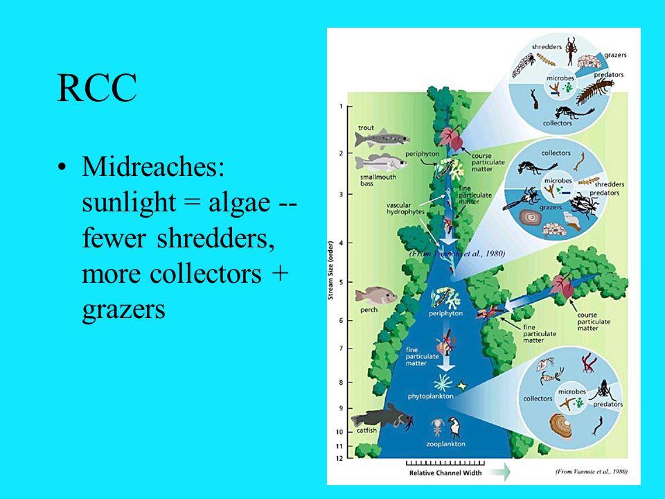RCC Midreaches: sunlight = algae -- fewer shredders, more collectors + grazers