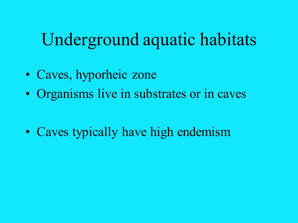 Underground aquatic habitats Caves, hyporheic zone Organisms live in substrates or in caves Caves typically have high endemism
