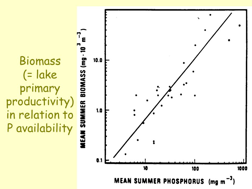 Biomass (= lake primary productivity) in relation to P availability