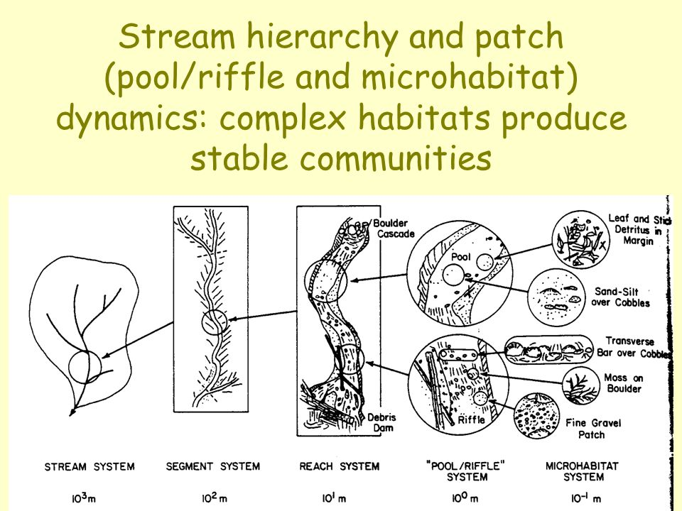 Stream hierarchy and patch (pool/riffle and microhabitat) dynamics: complex habitats produce stable communities