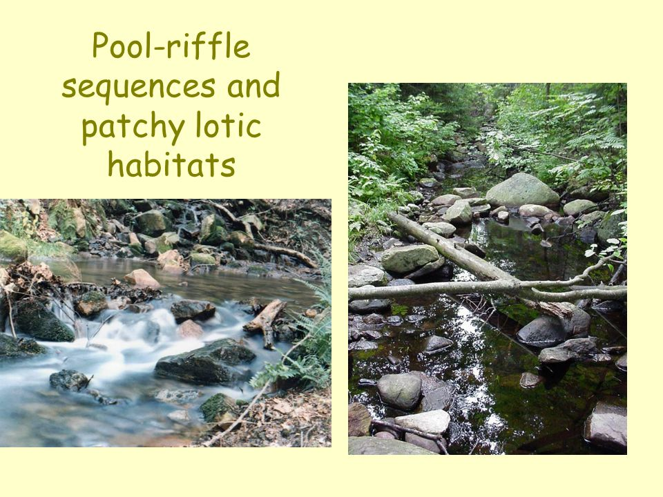 Pool-riffle sequences and patchy lotic habitats