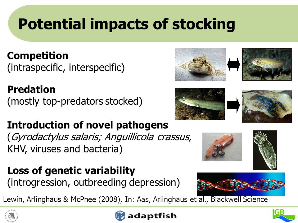 Potential impacts of stocking Hoch Competition (intraspecific, interspecific) Predation (mostly top-predators stocked) Introduction of novel pathogens