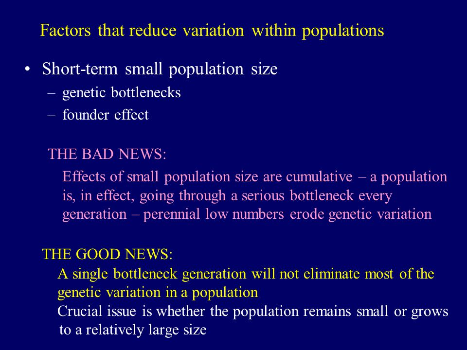 Factors that reduce variation within populations Short-term small population size –genetic bottlenecks –founder effect THE BAD NEWS: Effects of small population size are cumulative – a population is, in effect, going through a serious bottleneck every generation – perennial low numbers erode genetic variation THE GOOD NEWS: A single bottleneck generation will not eliminate most of the genetic variation in a population Crucial issue is whether the population remains small or grows to a relatively large size