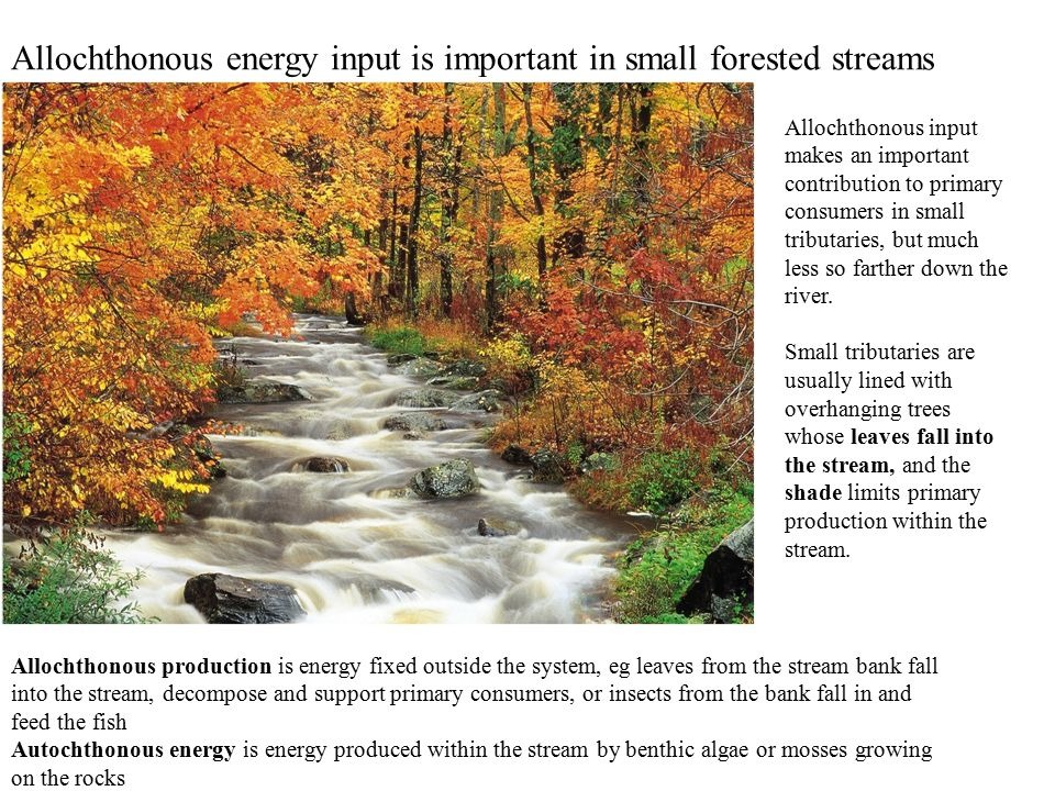 Allochthonous energy input is important in small forested streams Allochthonous production is energy fixed outside the system, eg leaves from the stream bank fall into the stream, decompose and support primary consumers, or insects from the bank fall in and feed the fish Autochthonous energy is energy produced within the stream by benthic algae or mosses growing on the rocks Allochthonous input makes an important contribution to primary consumers in small tributaries, but much less so farther down the river.