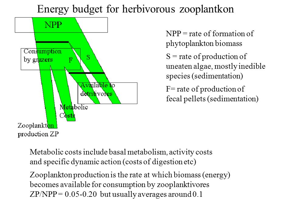NPP = rate of formation of phytoplankton biomass S = rate of production of uneaten algae, mostly inedible species (sedimentation) F= rate of production of fecal pellets (sedimentation) Energy budget for herbivorous zooplantkon Metabolic costs include basal metabolism, activity costs and specific dynamic action (costs of digestion etc) Zooplankton production is the rate at which biomass (energy) becomes available for consumption by zooplanktivores ZP/NPP = 0.05-0.20 but usually averages around 0.1