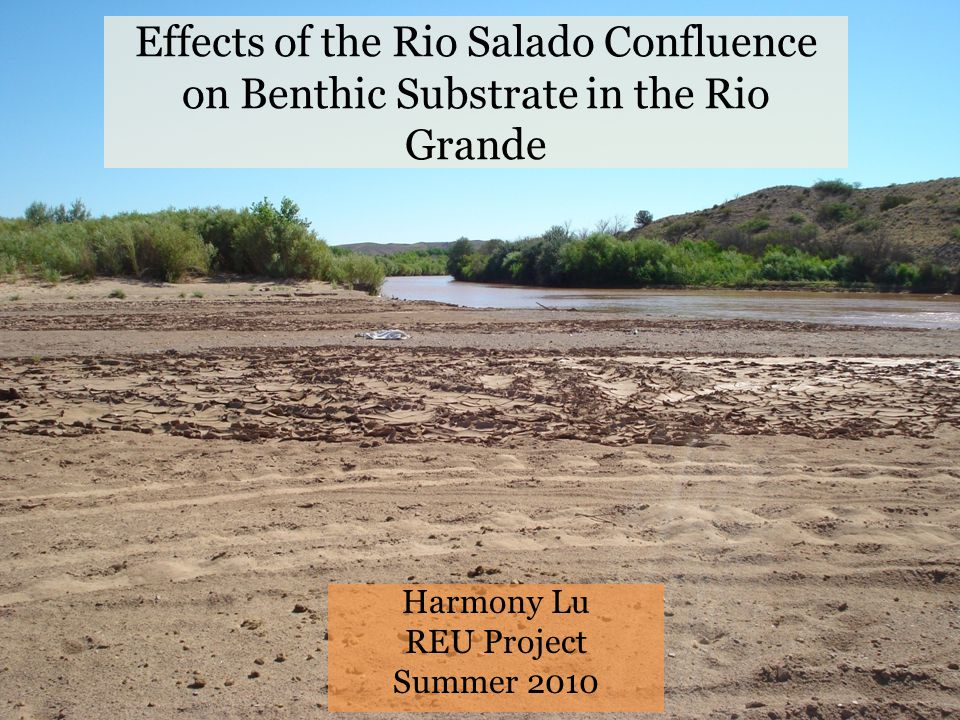 Effects of the Rio Salado Confluence on Benthic Substrate in the Rio Grande Harmony Lu REU Project Summer 2010