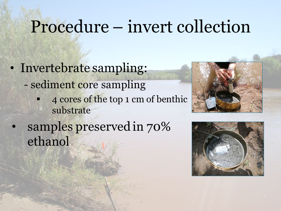 Procedure – invert collection Invertebrate sampling: - sediment core sampling  4 cores of the top 1 cm of benthic substrate samples preserved in 70% ethanol