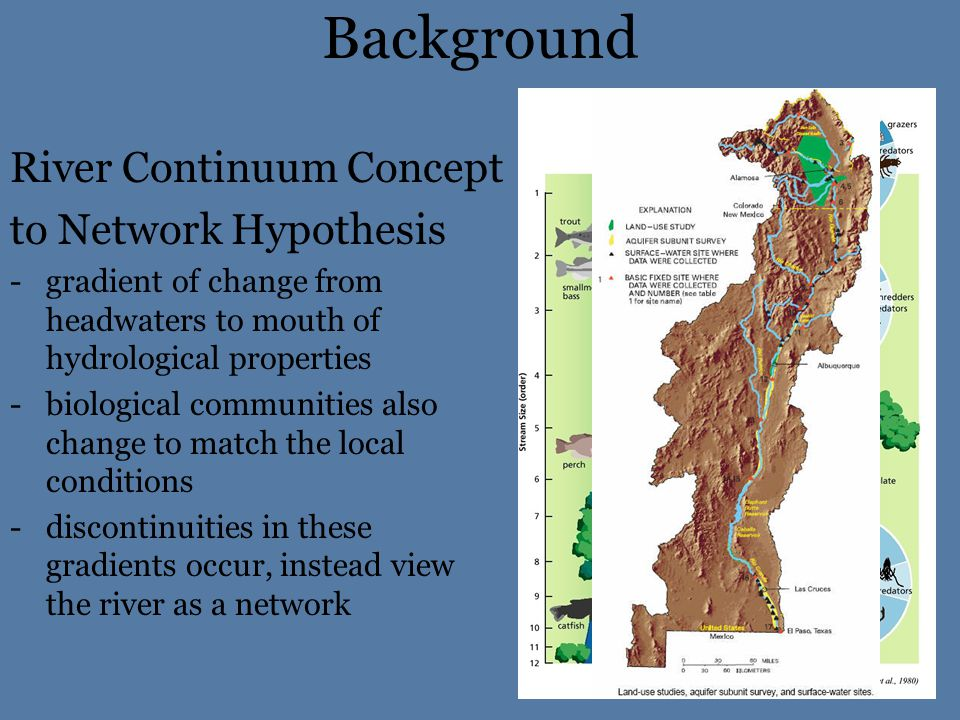 Background River Continuum Concept to Network Hypothesis -gradient of change from headwaters to mouth of hydrological properties -biological communities also change to match the local conditions -discontinuities in these gradients occur, instead view the river as a network