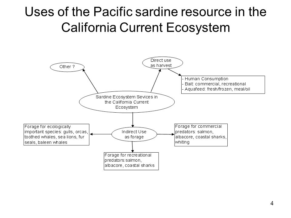 4 Uses of the Pacific sardine resource in the California Current Ecosystem