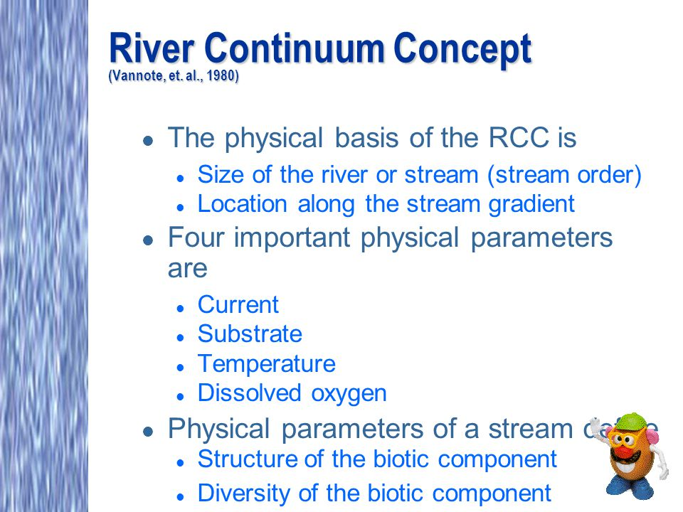 River Continuum Concept (Vannote, et. al., 1980) l The physical basis of the RCC is l Size of the river or stream (stream order) l Location along the