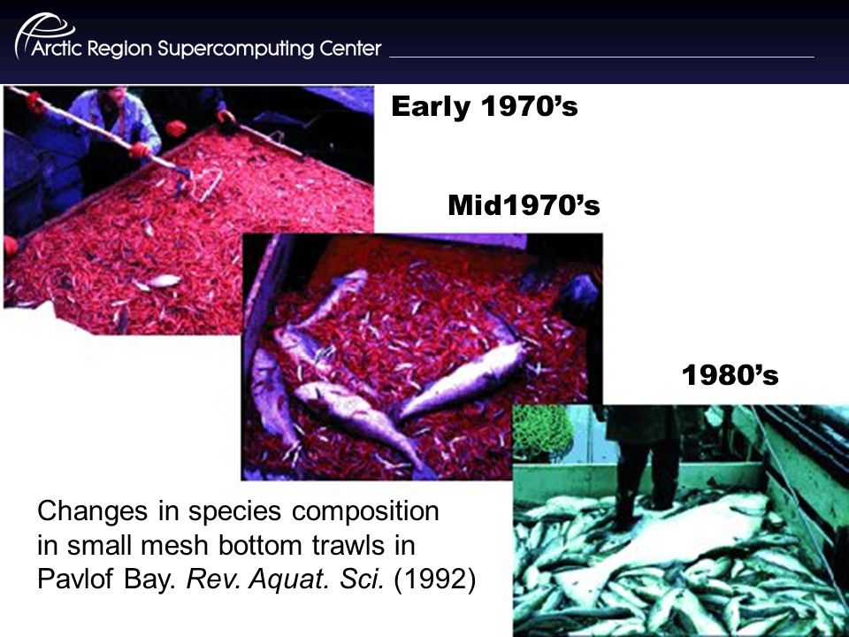 Early 1970's Mid1970's 1980's Changes in species composition in small mesh bottom trawls in Pavlof Bay.