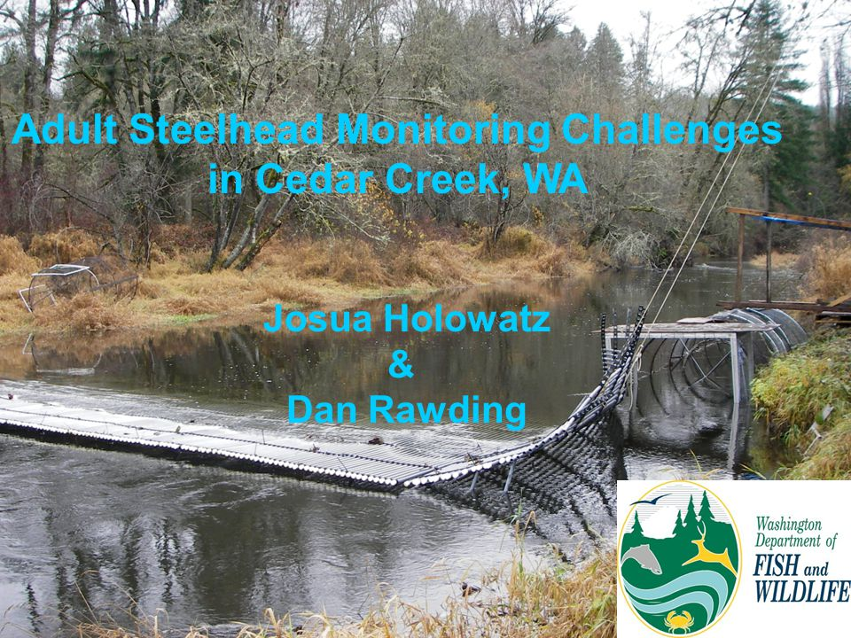 Adult Steelhead Monitoring Challenges in Cedar Creek, WA Josua Holowatz & Dan Rawding