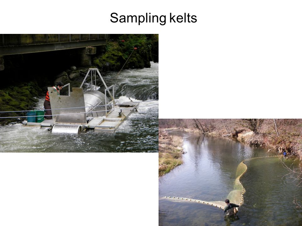 Sampling kelts