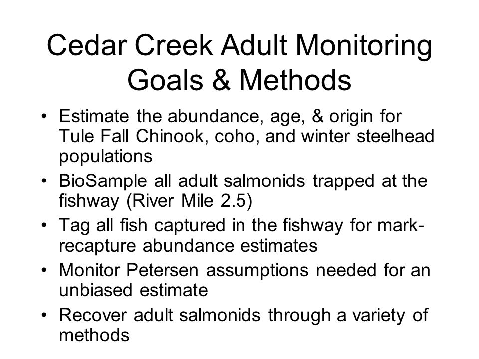 Cedar Creek Adult Monitoring Goals & Methods Estimate the abundance, age, & origin for Tule Fall Chinook, coho, and winter steelhead populations BioSample all adult salmonids trapped at the fishway (River Mile 2.5) Tag all fish captured in the fishway for mark- recapture abundance estimates Monitor Petersen assumptions needed for an unbiased estimate Recover adult salmonids through a variety of methods