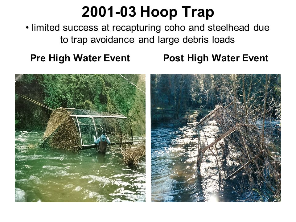 2001-03 Hoop Trap Pre High Water EventPost High Water Event limited success at recapturing coho and steelhead due to trap avoidance and large debris loads