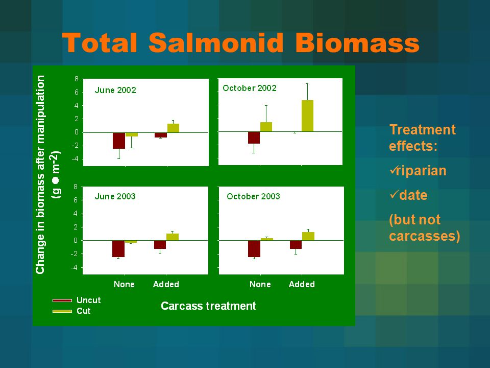 Total Salmonid Biomass Treatment effects: riparian date (but not carcasses)