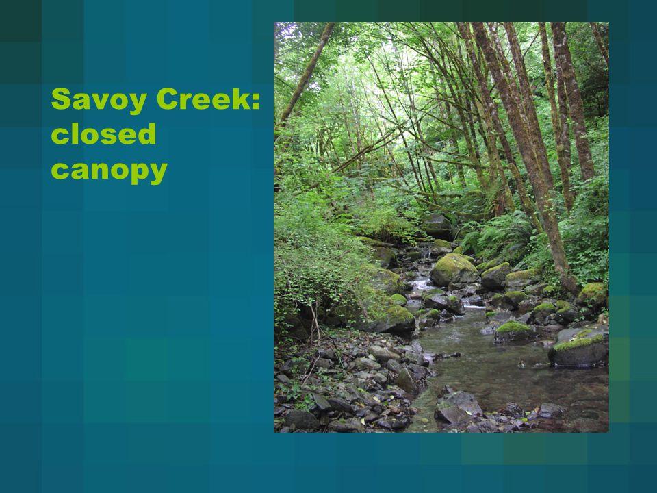 Savoy Creek: closed canopy
