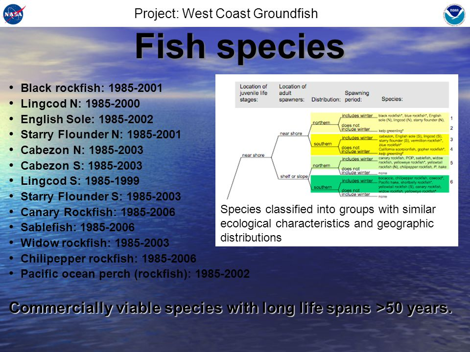 Background Various hypothesis on recruitment investigated –Variability of the west coast Spring Transition (upwelling commences) –Fine scale temporal variability of SST –Fine scale spatial variability of SST Stock assessment model (NOAA Stock Synthesis II) used to generate recruitment estimates from historical observations of fish catch and surveys Various hypothesis on recruitment investigated –Variability of the west coast Spring Transition (upwelling commences) –Fine scale temporal variability of SST –Fine scale spatial variability of SST Stock assessment model (NOAA Stock Synthesis II) used to generate recruitment estimates from historical observations of fish catch and surveys Project: West Coast Groundfish