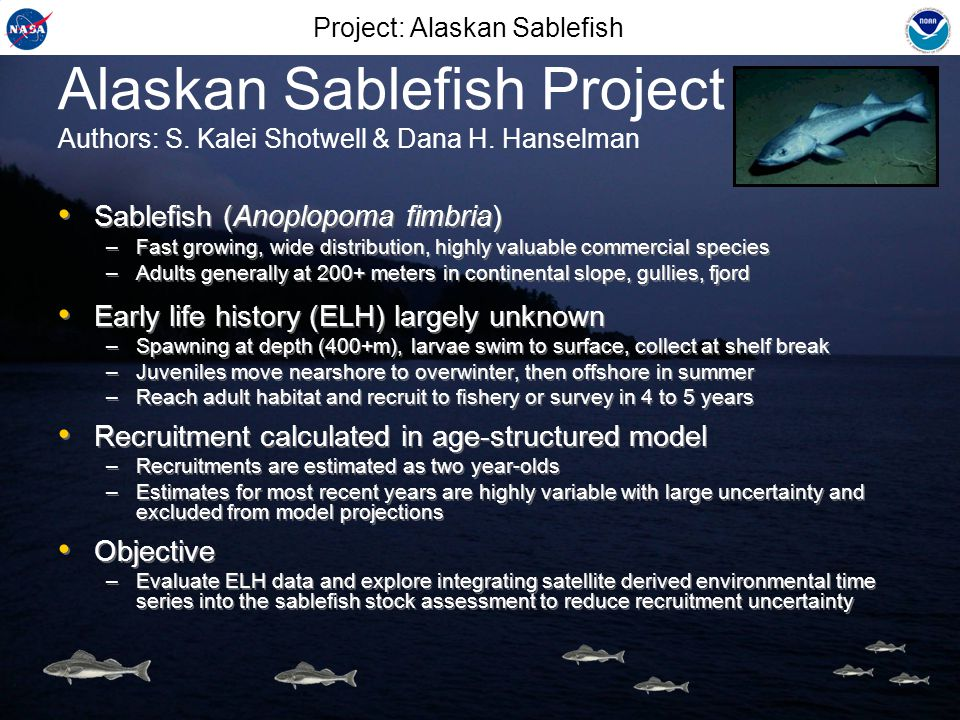 Early Life History 1977-1986 1987-1996 1997-2006 Sablefish recruitment anomalies from model Project: Alaskan Sablefish Bad Good Collected historical ELH survey data and compared to model recruitment Model recruitment estimates show high autocorrelation Potential decadal regimes, supported by survey data Collected historical ELH survey data and compared to model recruitment Model recruitment estimates show high autocorrelation Potential decadal regimes, supported by survey data