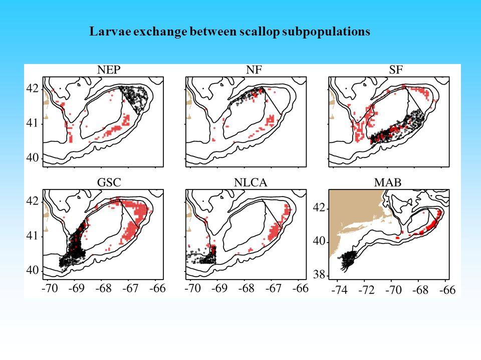 Larvae exchange between scallop subpopulations