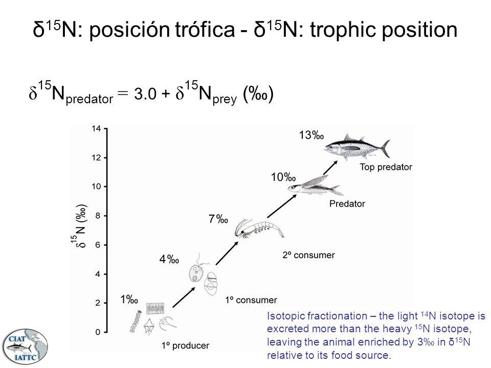 δ 15 N: posición trófica - δ 15 N: trophic position Isotopic fractionation – the light 14 N isotope is excreted more than the heavy 15 N isotope, leav