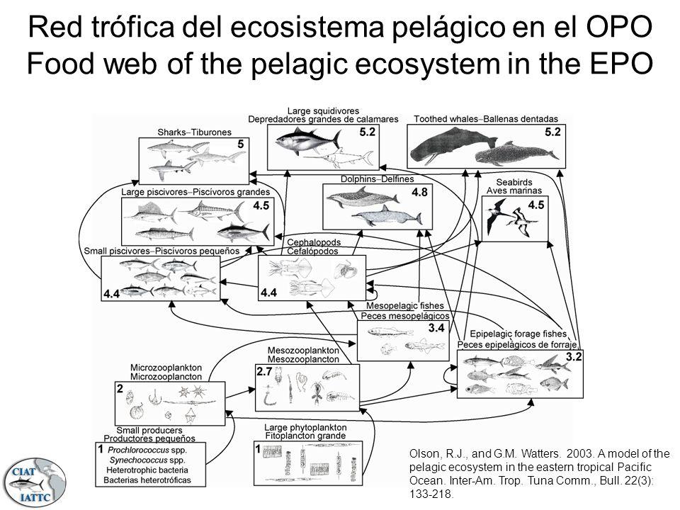 Red trófica del ecosistema pelágico en el OPO Food web of the pelagic ecosystem in the EPO Olson, R.J., and G.M. Watters. 2003. A model of the pelagic