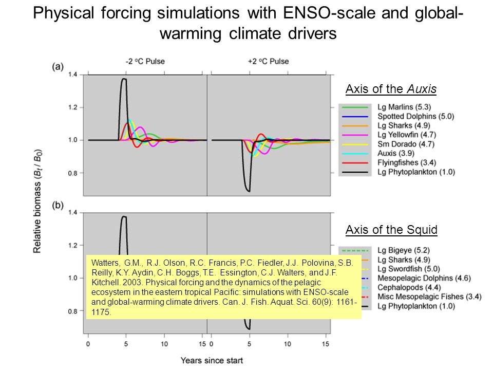 Physical forcing simulations with ENSO-scale and global- warming climate drivers Axis of the Auxis Axis of the Squid Watters, G.M., R.J.
