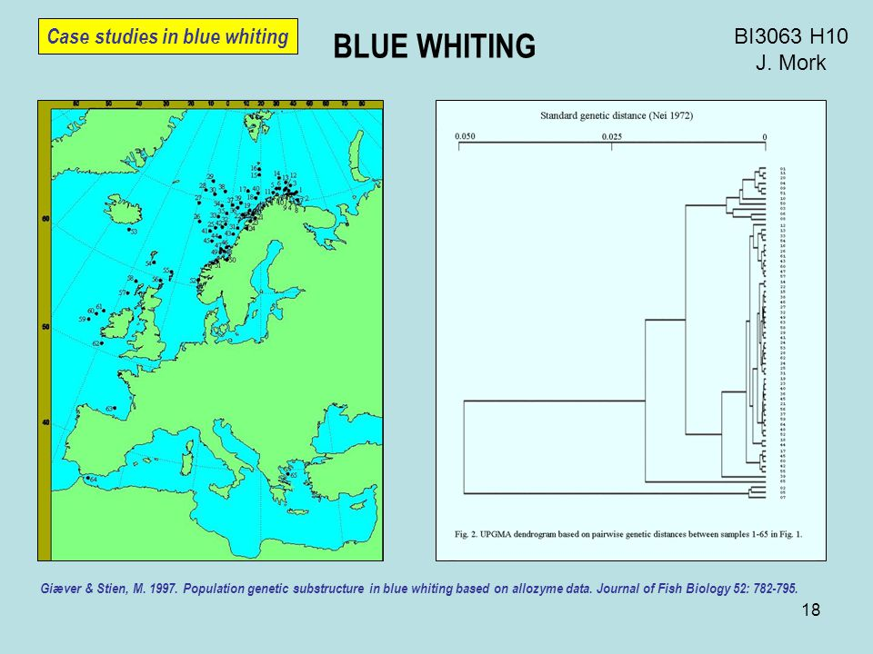 18 BI3063 H10 J. Mork BLUE WHITING Case studies in blue whiting Giæver & Stien, M.