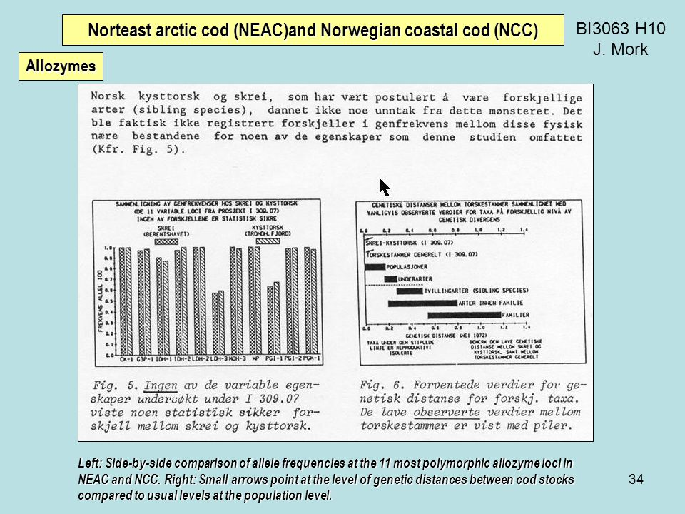34 BI3063 H10 J. Mork Norteast arctic cod (NEAC)and Norwegian coastal cod (NCC) Left: Side-by-side comparison of allele frequencies at the 11 most pol