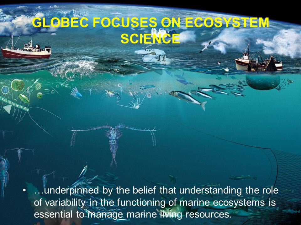 GLOBEC FOCUSES ON ECOSYSTEM SCIENCE …underpinned by the belief that understanding the role of variability in the functioning of marine ecosystems is essential to manage marine living resources.