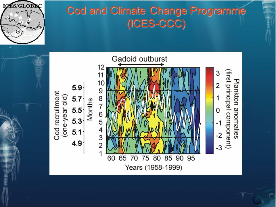 Cod and Climate Change Programme (ICES-CCC)