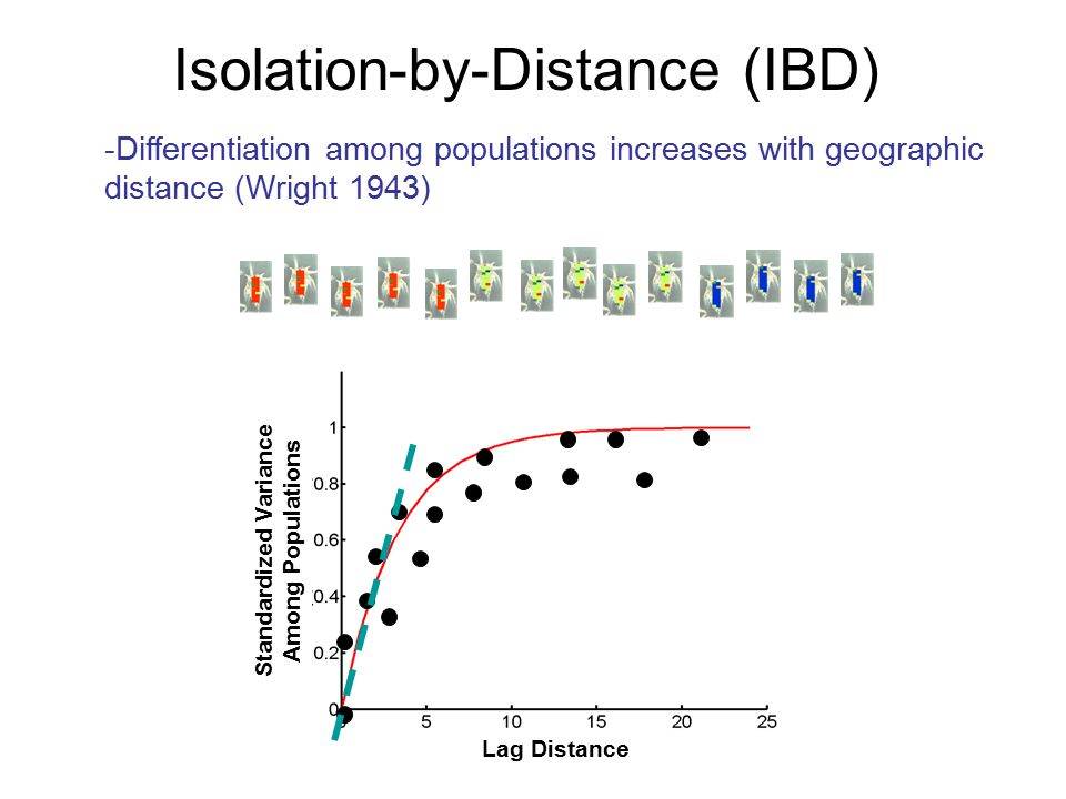 Lag Distance Standardized Variance Among Populations -Differentiation among populations increases with geographic distance (Wright 1943) Isolation-by-Distance (IBD)