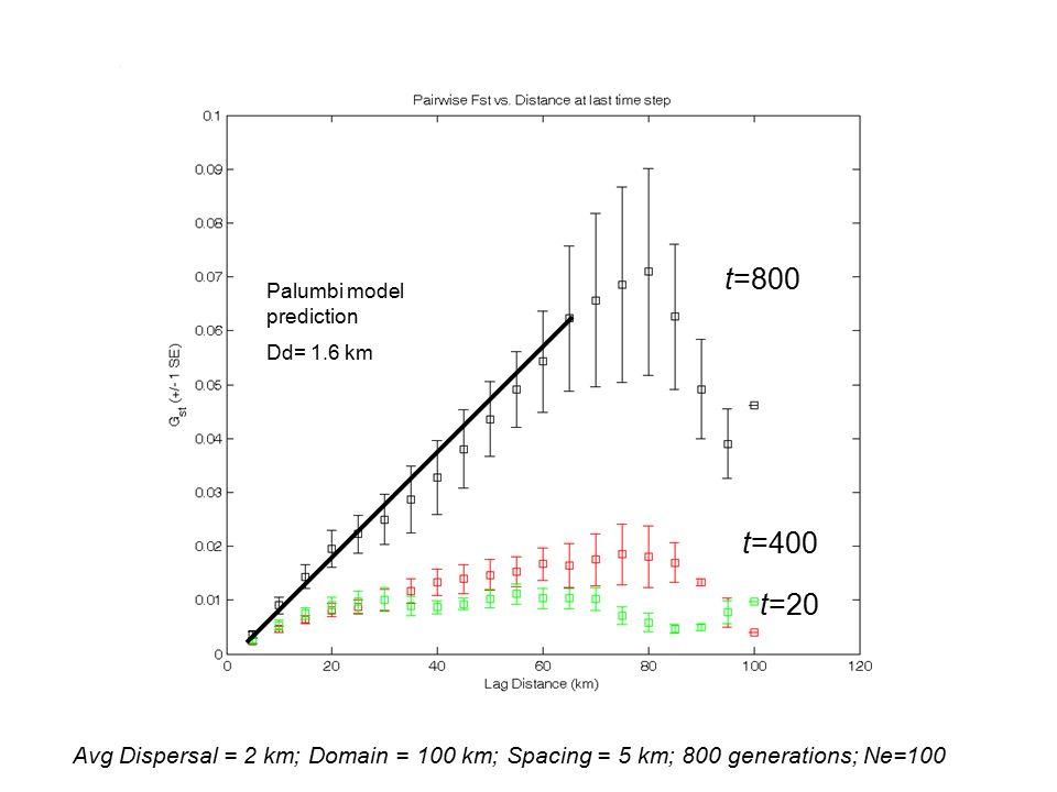 Avg Dispersal = 2 km; Domain = 100 km; Spacing = 5 km; 800 generations; Ne=100 t=20 t=400 t=800 Palumbi model prediction Dd= 1.6 km