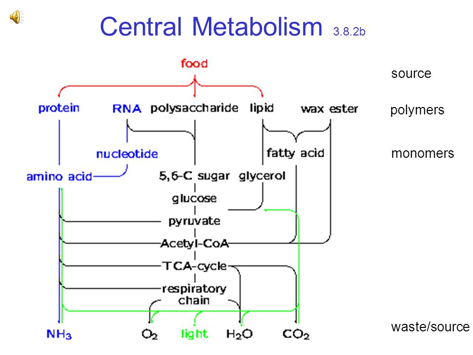 Central Metabolism 3.8.2b polymers monomers waste/source source
