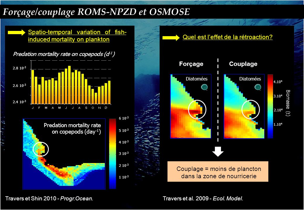 Spatio-temporal variation of fish- induced mortality on plankton 2.4 10 -3 2.6 10 -3 2.8 10 -3 Predation mortality rate on copepods (d -1 ) Forçage/couplage ROMS-NPZD et OSMOSE Travers et Shin 2010 - Progr.Ocean.