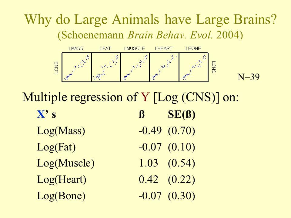 Why do Large Animals have Large Brains. (Schoenemann Brain Behav.