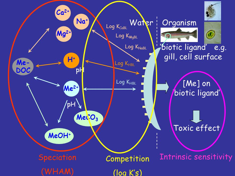 MeOH + MeCO 3 Me- DOC pH [Me] on 'biotic ligand' Toxic effect WaterOrganism H+H+ pH Me 2+ Ca 2+ Na + Mg 2+ 'biotic ligand' e.g.