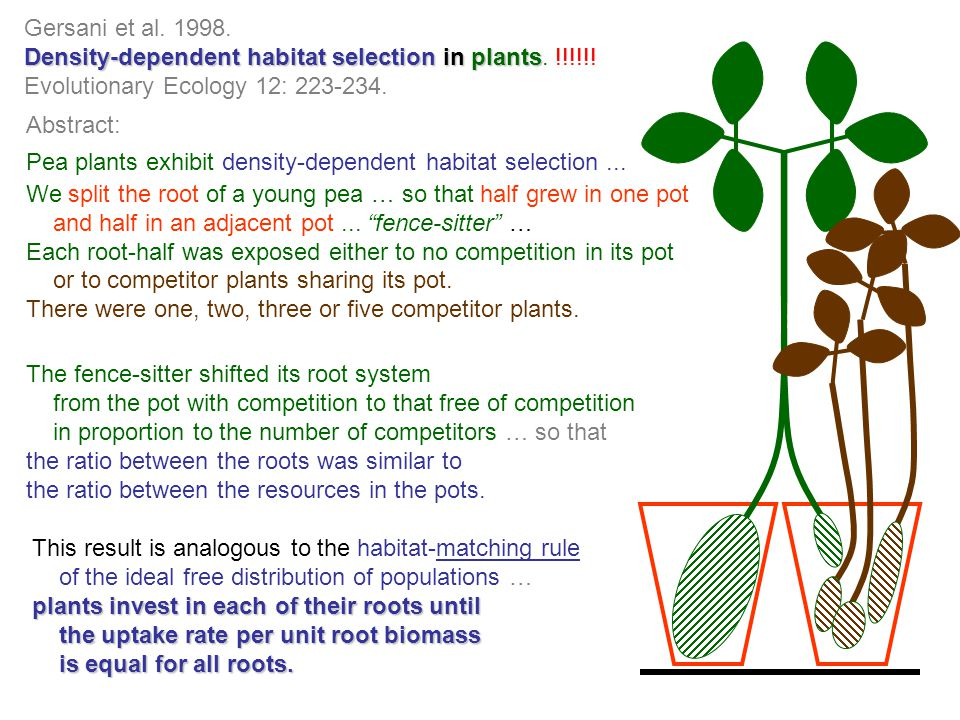 Gersani et al. 1998. Density-dependent habitat selection in plants Density-dependent habitat selection in plants. !!!!!! Evolutionary Ecology 12: 223-