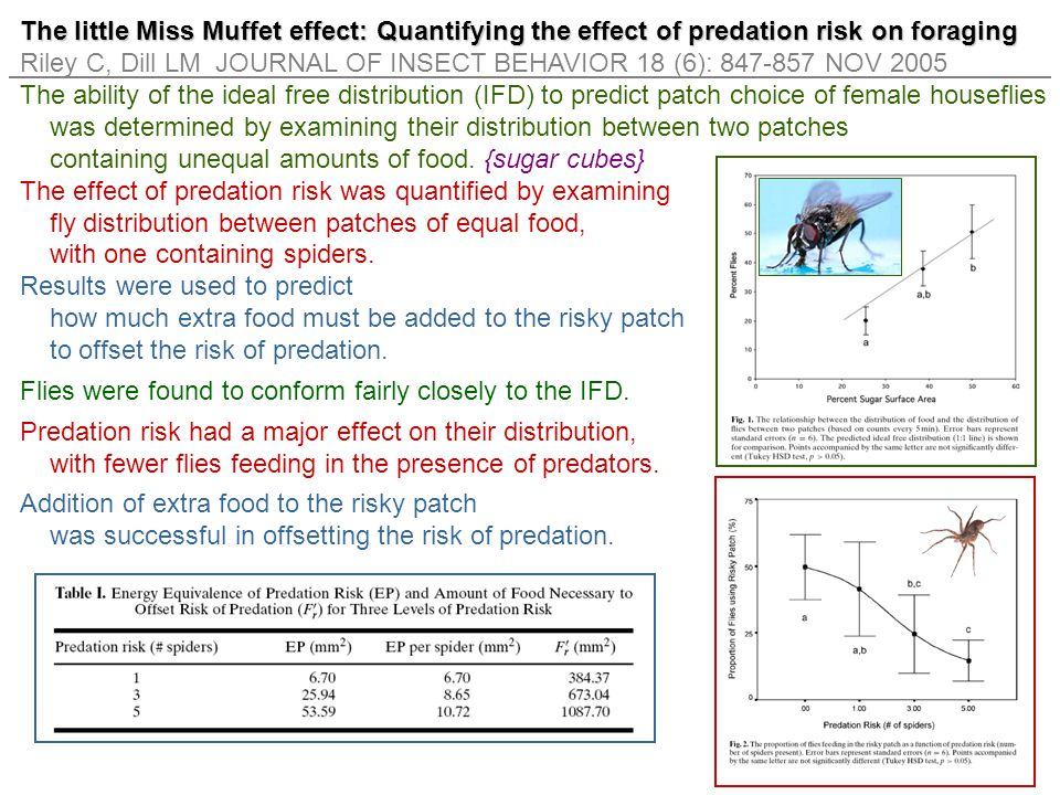 The little Miss Muffet effect: Quantifying the effect of predation risk on foraging Riley C, Dill LM JOURNAL OF INSECT BEHAVIOR 18 (6): 847-857 NOV 20