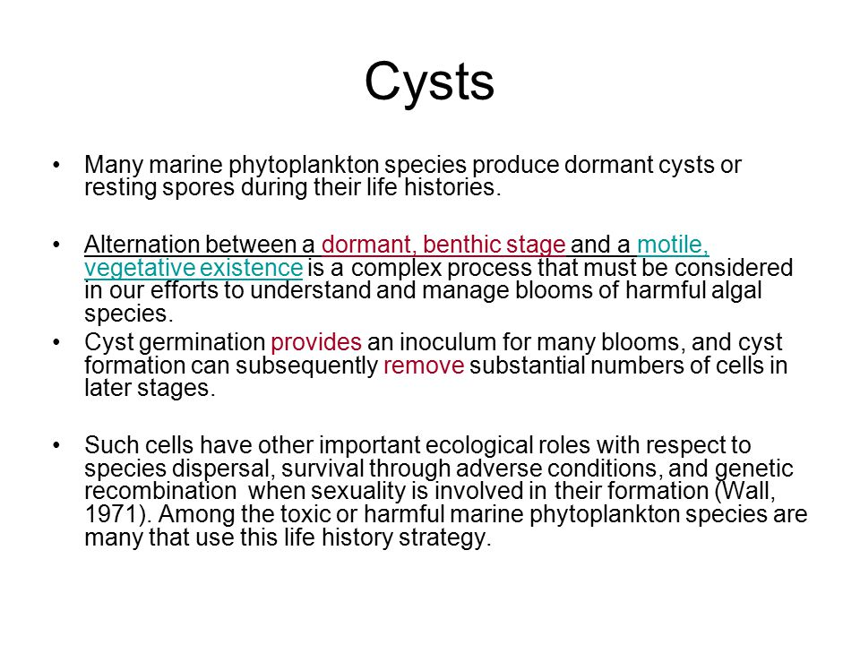 Cysts Many marine phytoplankton species produce dormant cysts or resting spores during their life histories. Alternation between a dormant, benthic st