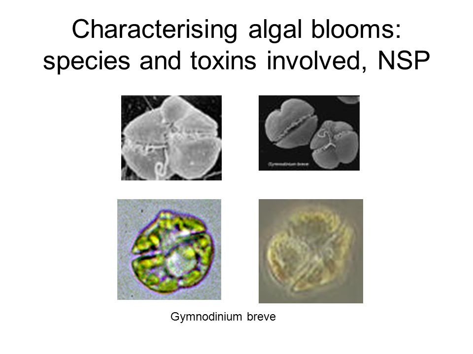 Characterising algal blooms: species and toxins involved, NSP Gymnodinium breve
