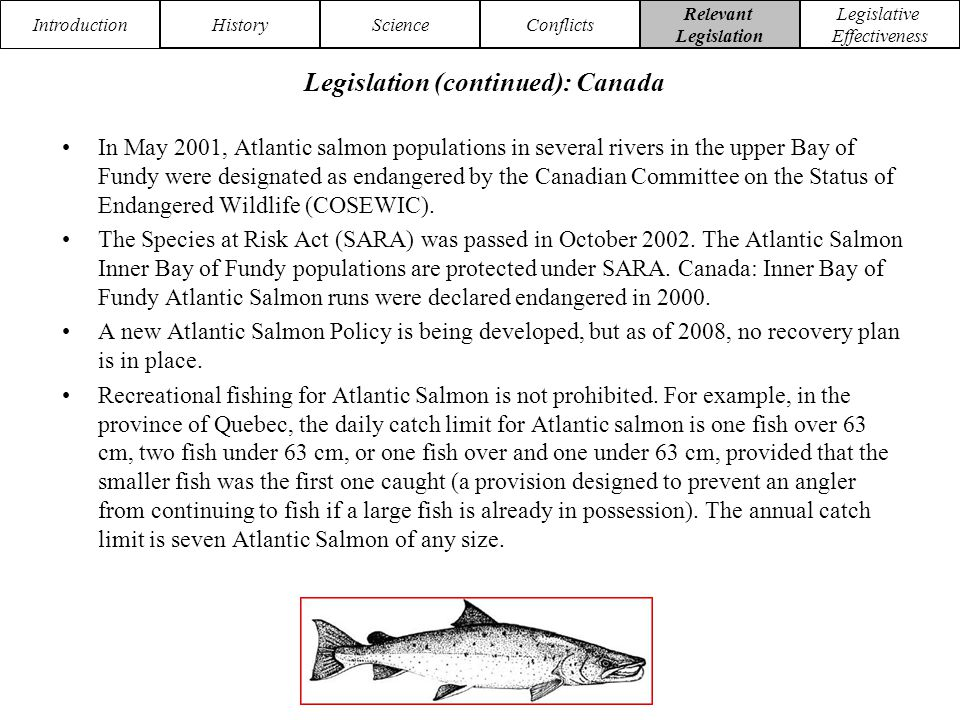 Introduction HistoryScienceConflicts Relevant Legislation Legislative Effectiveness In May 2001, Atlantic salmon populations in several rivers in the upper Bay of Fundy were designated as endangered by the Canadian Committee on the Status of Endangered Wildlife (COSEWIC).