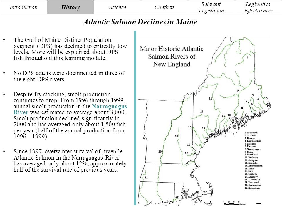 Introduction HistoryScienceConflicts Relevant Legislation Legislative Effectiveness More information about this organization can be found at NASCO ~ North Atlantic Salmon Conservation Organisation.