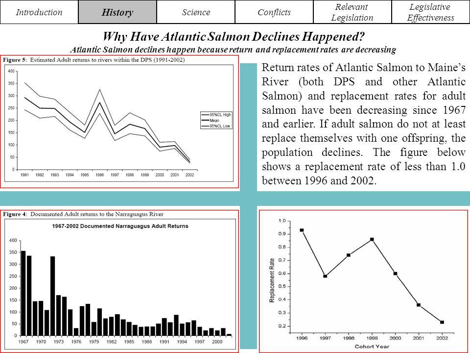 Introduction History ScienceConflicts Relevant Legislation Legislative Effectiveness Why Have Atlantic Salmon Declines Happened.