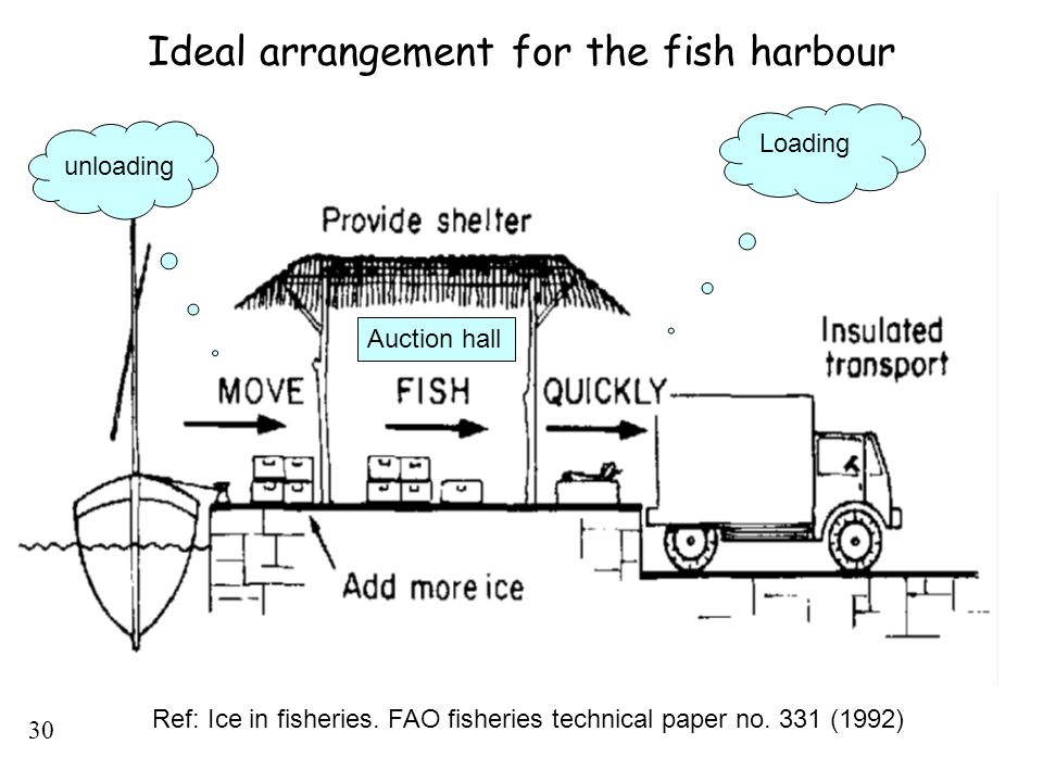 30 Ideal arrangement for the fish harbour Ref: Ice in fisheries. FAO fisheries technical paper no. 331 (1992) unloading Loading Auction hall